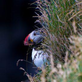 Voir les oiseaux migrateurs