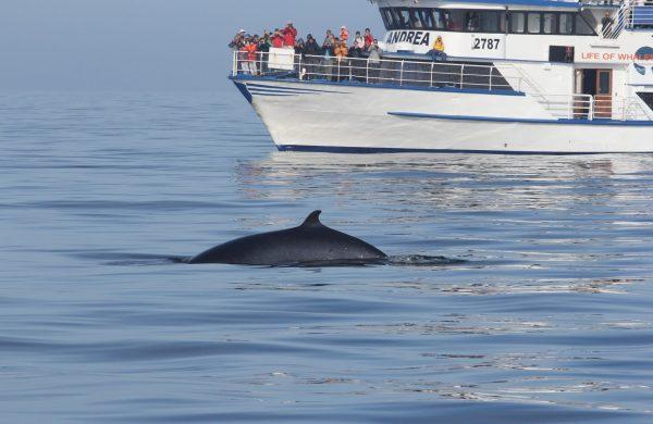 Groupe de personnes observant les baleines sur la bateau Andrea