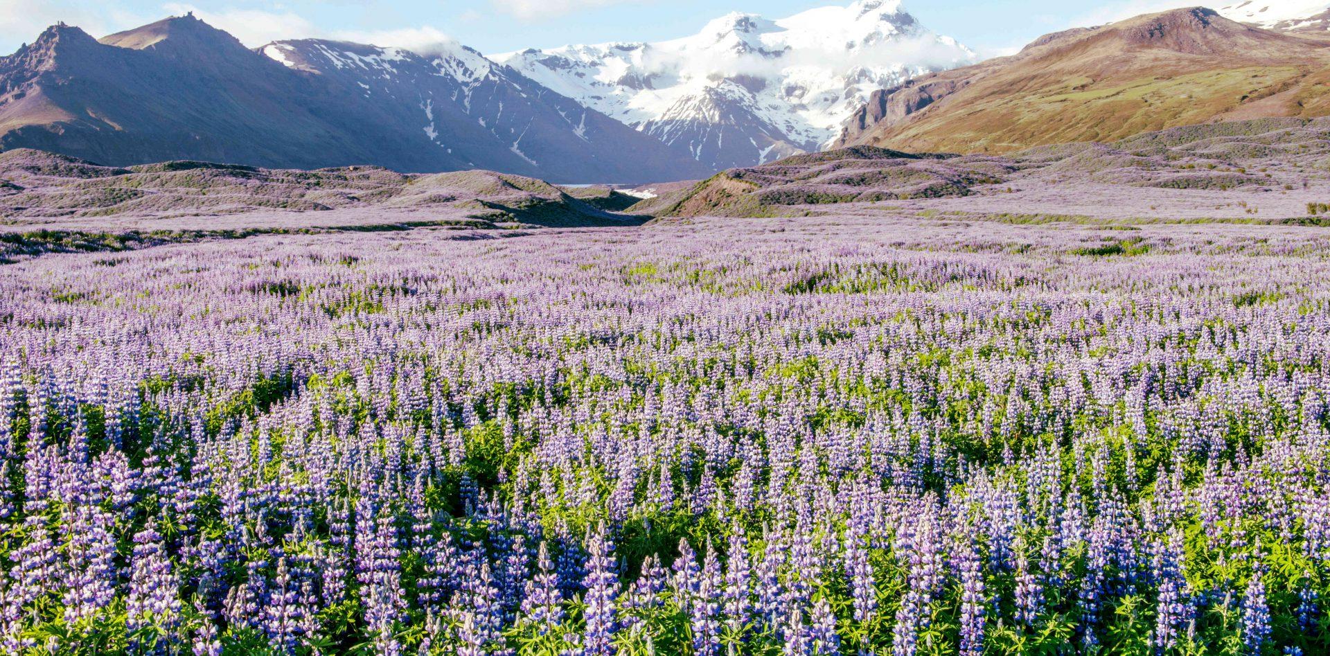 Camping Francophone Islande
