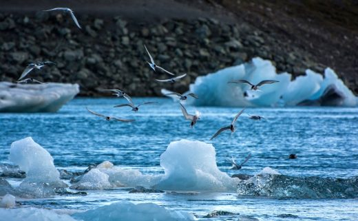 Glacier du Jökulsárlón