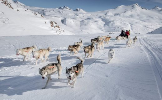 The dogs fanning out in front of the dog sled in East Greenland between Sermilik and Tasiilaq